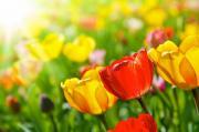 fleurs retour du printemps